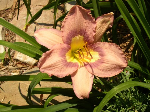 Chinese Temple Flower
